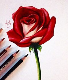 How To Draw A Rose Flower Sketches Flower Sketch Pencil Flower Drawing
