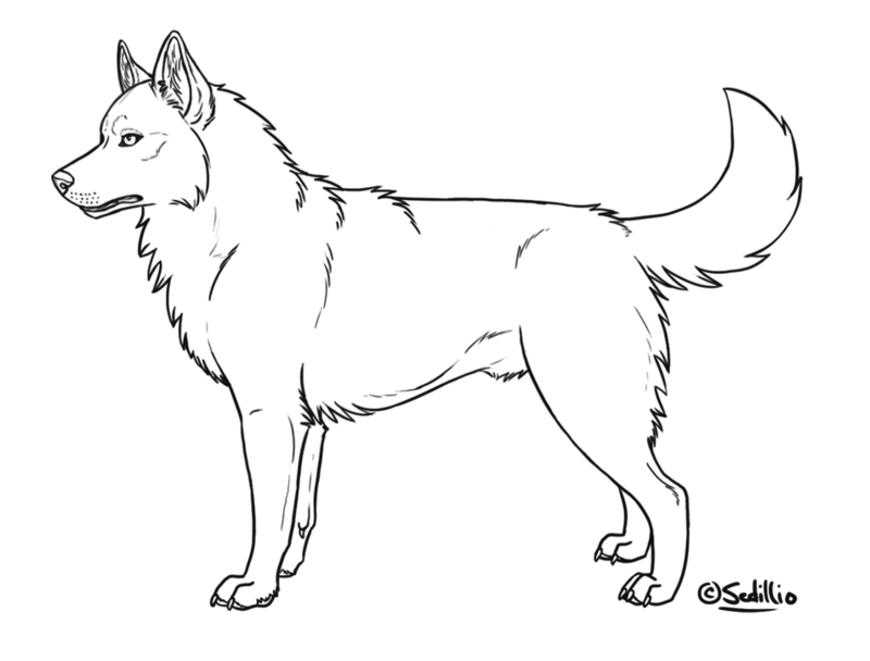 coloring page husky | deviantART: More Like Siberian Husky Puppy ...