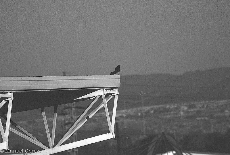 Flickr photo #blackandwhite #university #queretaro #mexico #photos #photography #streetphotography #urban #city #bird
