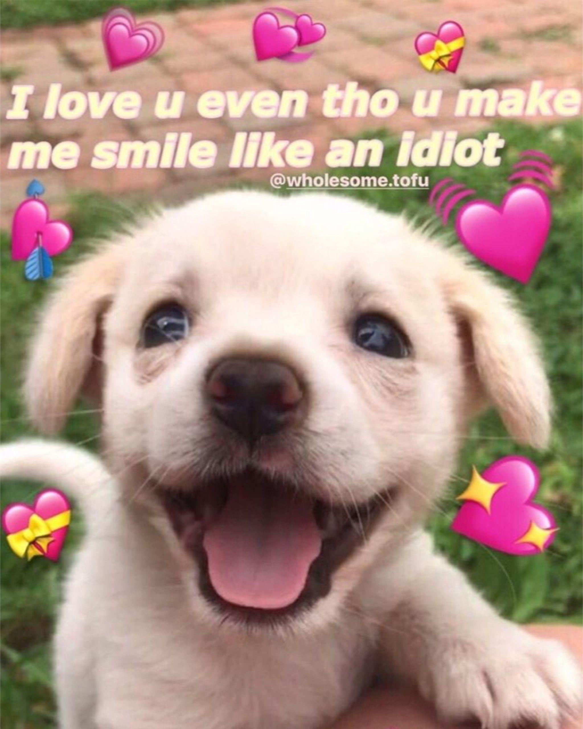 Pin By Jenny On Theooooooooooo 3 Cute Love Memes Cute Memes Love You Meme