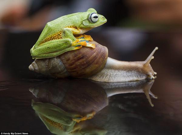"""Delightful frog hitchin' a slow ride. :) """"Esto de caminar lento es fun!!"""" dice el sapito jajja"""