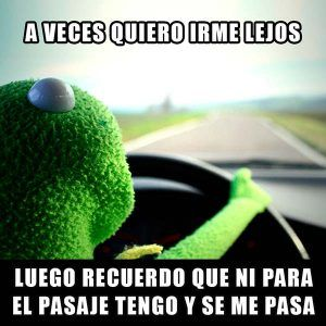 Imagenes Bonitas Imagenes Chistosas Frases De Risa Memes De La Rana