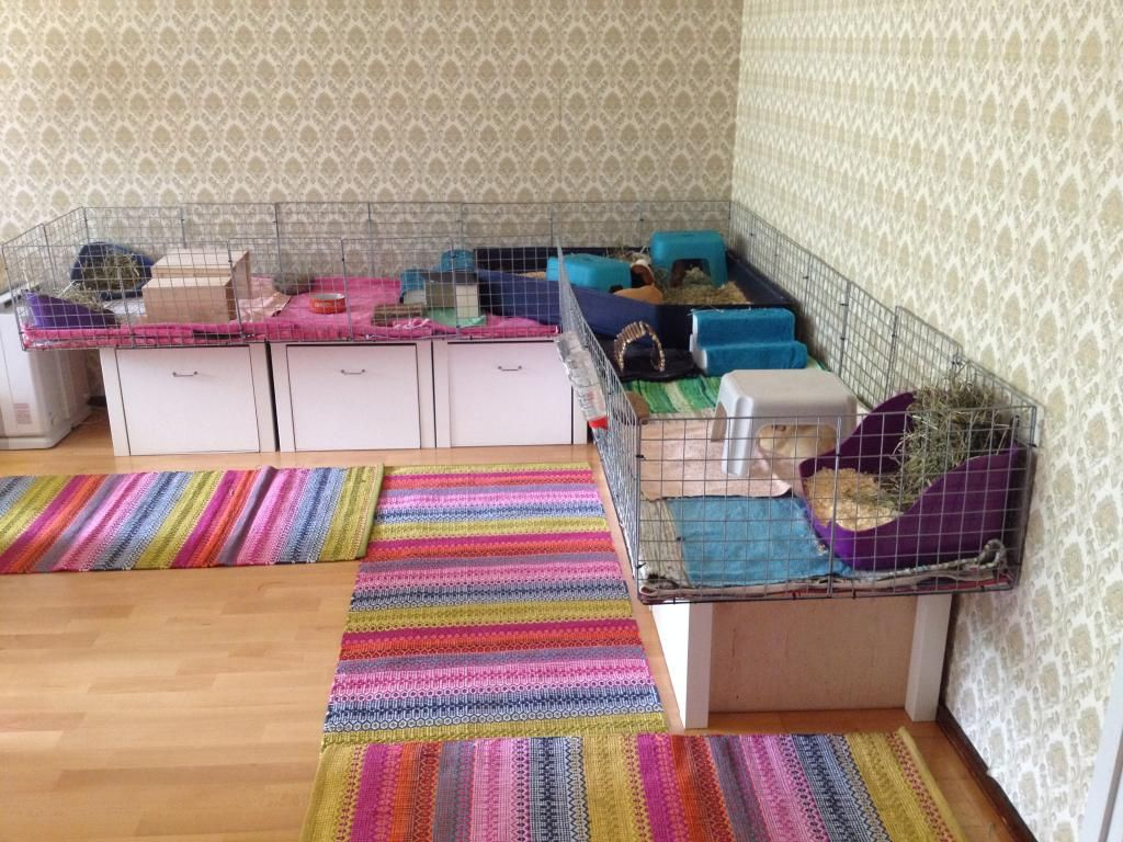 A simple spacious guinea pig cage made of cubes and for Simple guinea pig cage