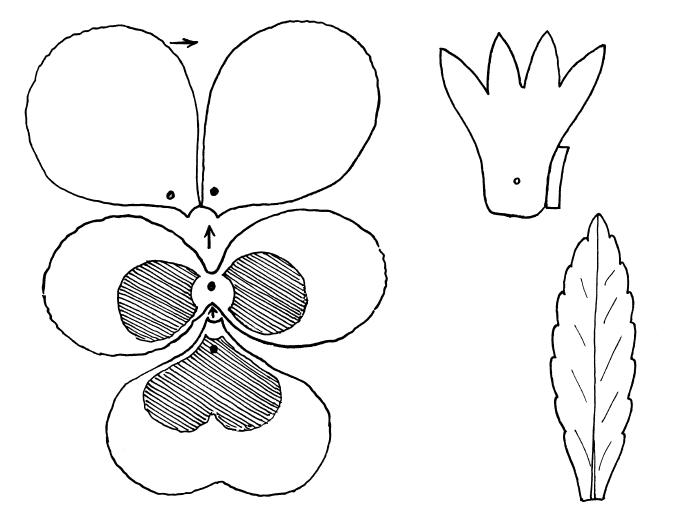 Выкройки цветов из ткани или фома
