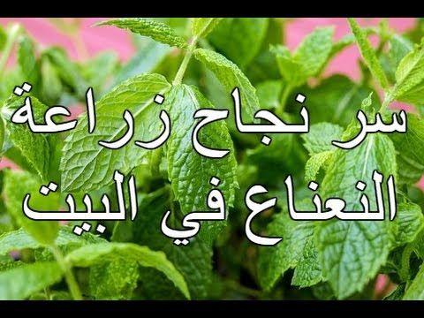 Pin On زراعة النباتات والخضار والفواكه