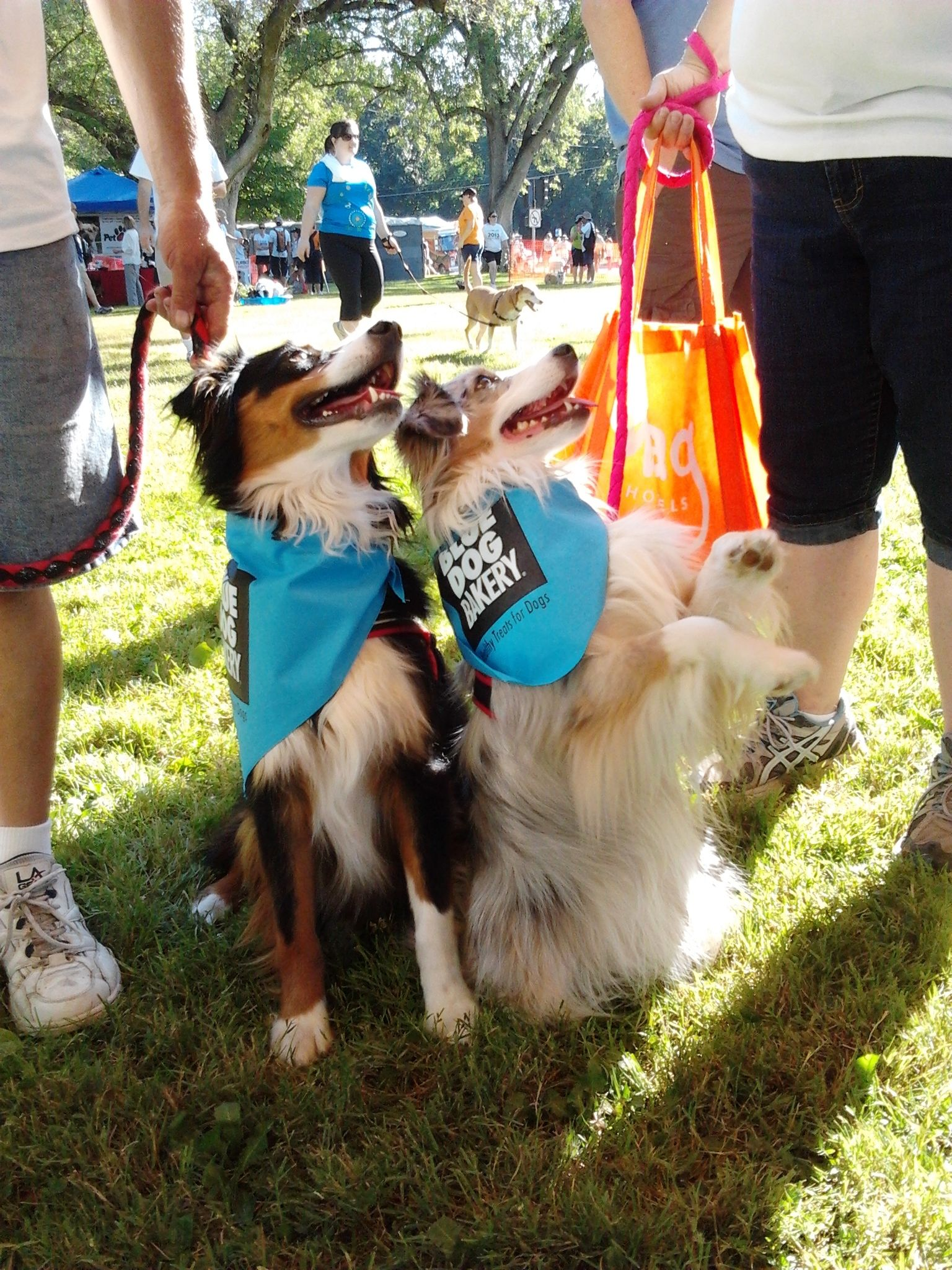 Gimme Them Treats Blue Dog Dogs Animals