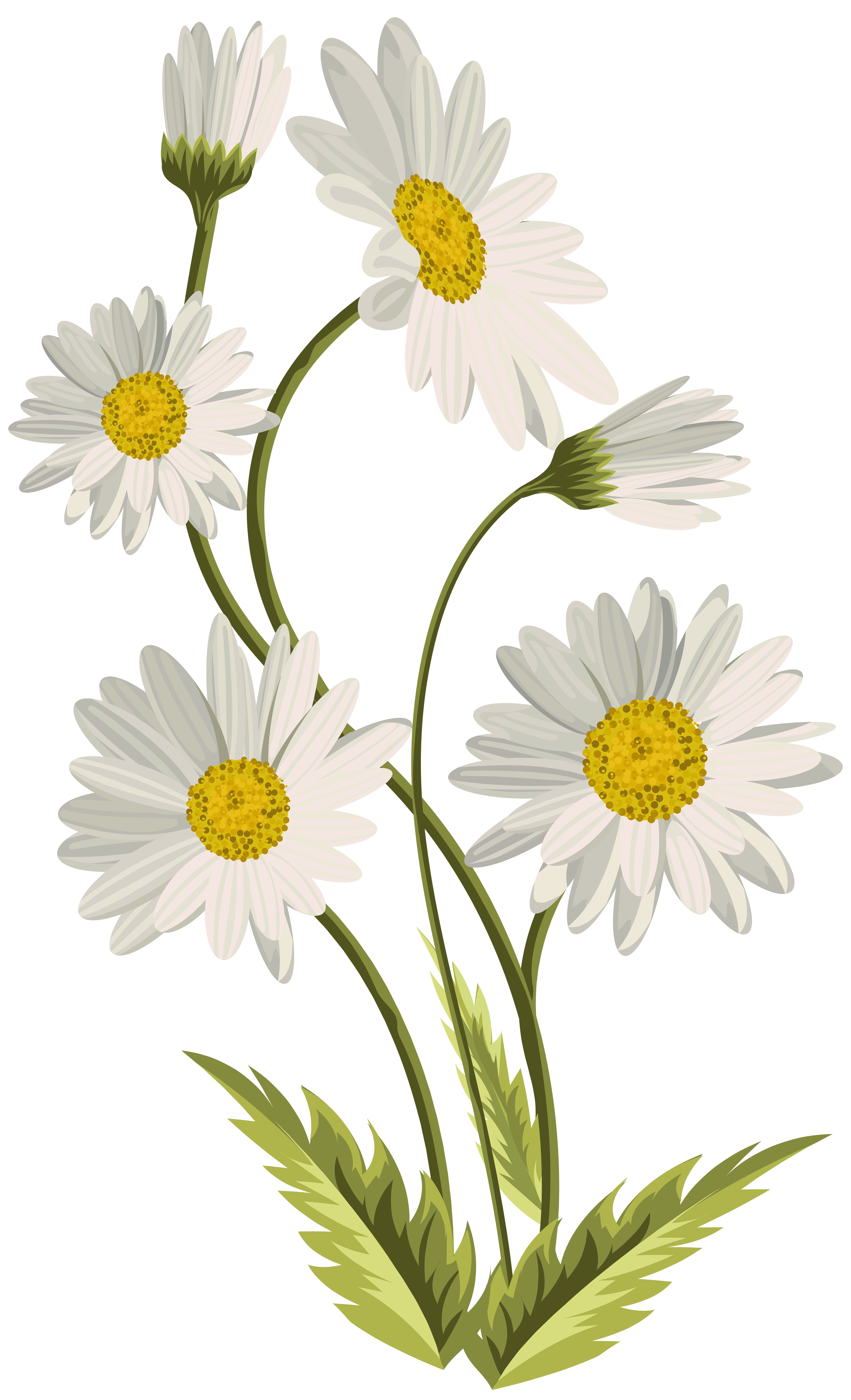 Daisies Transparent Png Clip Art Image Gallery Yopriceville High Quality Images And Transparent Png Free Clipart Daisy Painting Daisy Art Flower Drawing