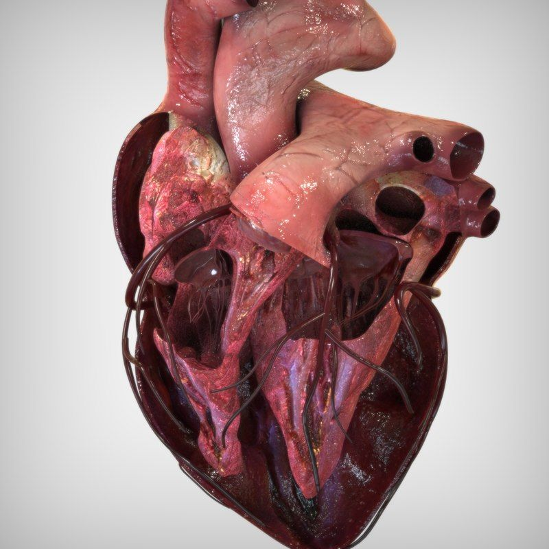 Heart Anatomy 3d Image collections - human body anatomy