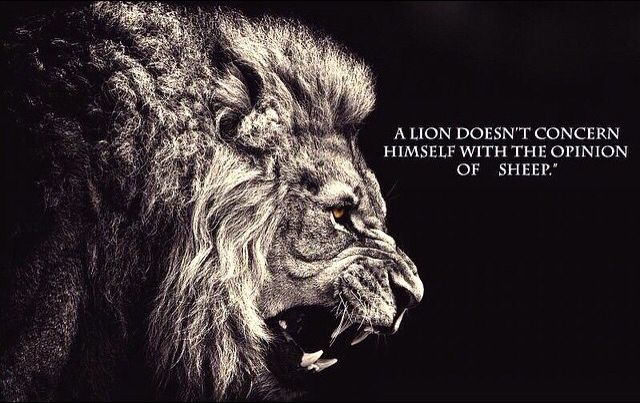 A lion doesn t concern himself with opinion of sheep. This is why a lion  will be my next tattoo 4ee6b93356