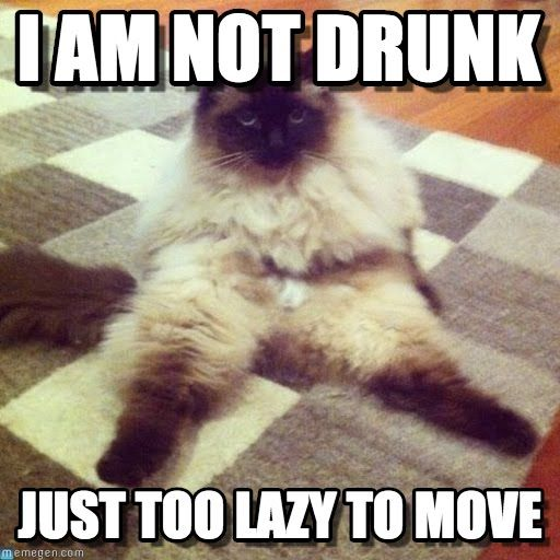 Not Funny Cat Meme : Lazy cat still cute i am not drunk just too