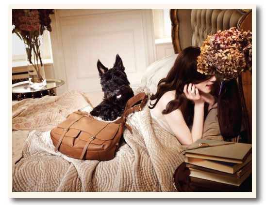 Radley's Vintage Scottie | under the blanket