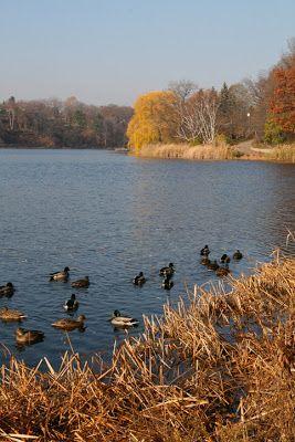 Grenadier Pond -- High Park, Toronto, Ontario