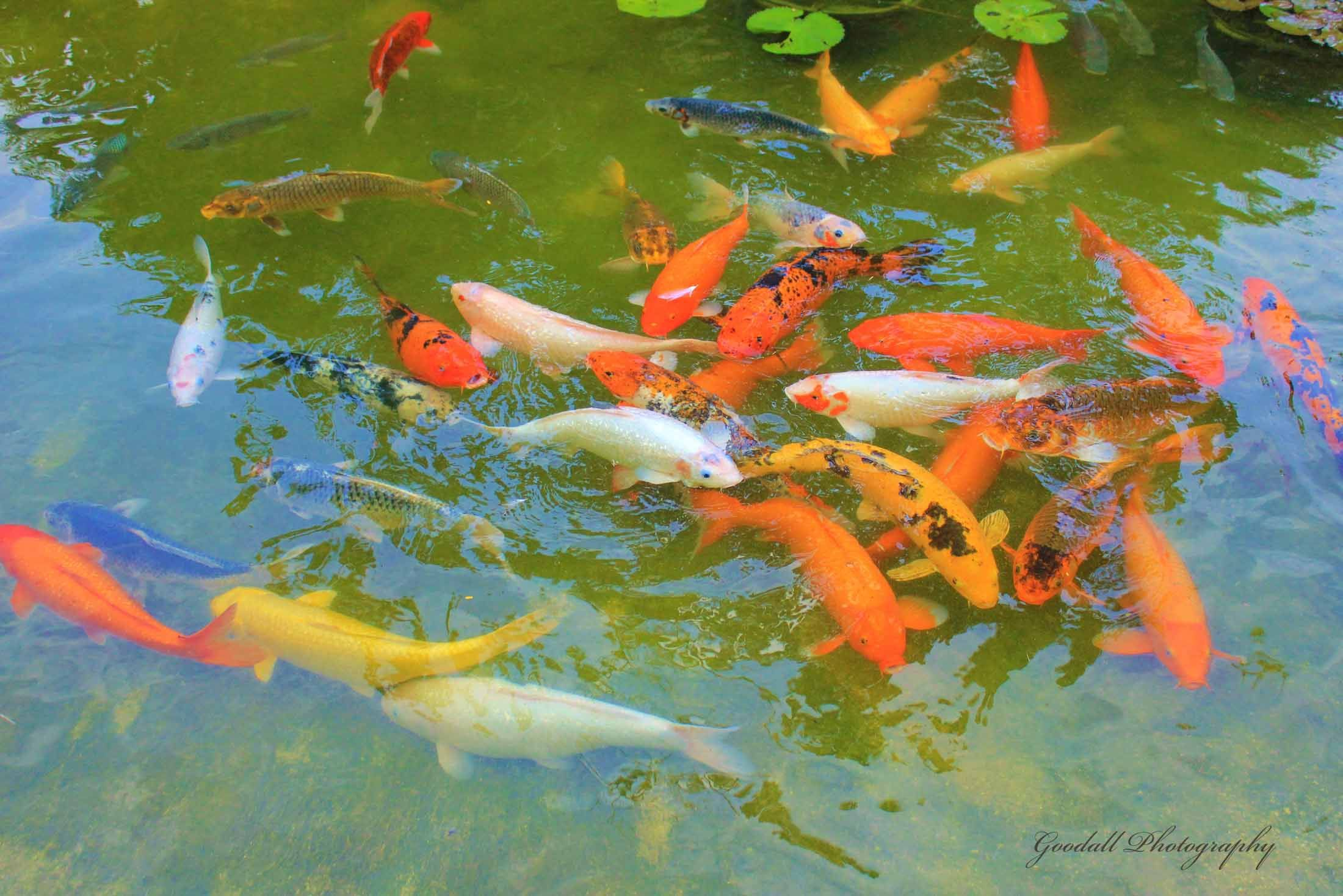 Fish Color Festival / West Palm Beach / January 2013 https://www ...