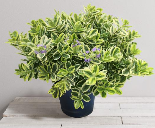 v ronique panach e toussaint fleurs et plantes pinterest livraison fleurs planter des. Black Bedroom Furniture Sets. Home Design Ideas