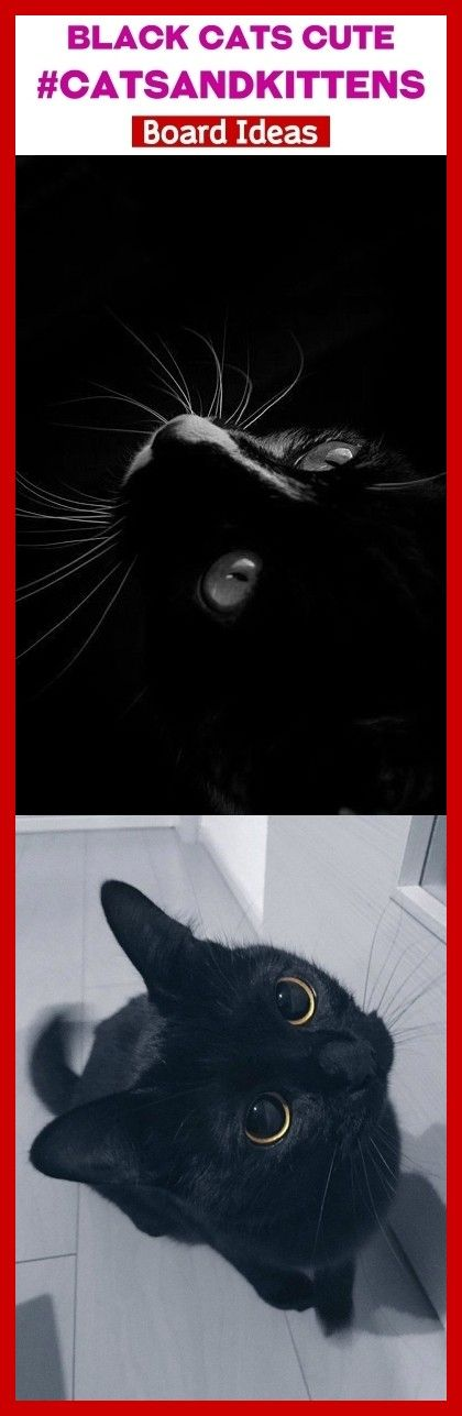 Photo of Gatos negros lindos #catsandkittens #seo # seo2020 #animals. gatos negros estéticos, bl …