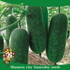 Suntoday Winter Melon/Wax Gourd/Dong Gua (Benincasa hispida) Organic Seeds 20Pcs #plants #seeds #wintermelon Suntoday Winter Melon/Wax Gourd/Dong Gua (Benincasa hispida) Organic Seeds 20Pcs #plants #seeds #wintermelon