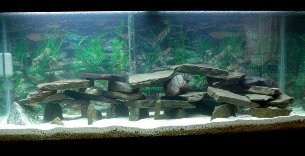 How to set up and aquascape a Cichlid habitat | Cichlids ...