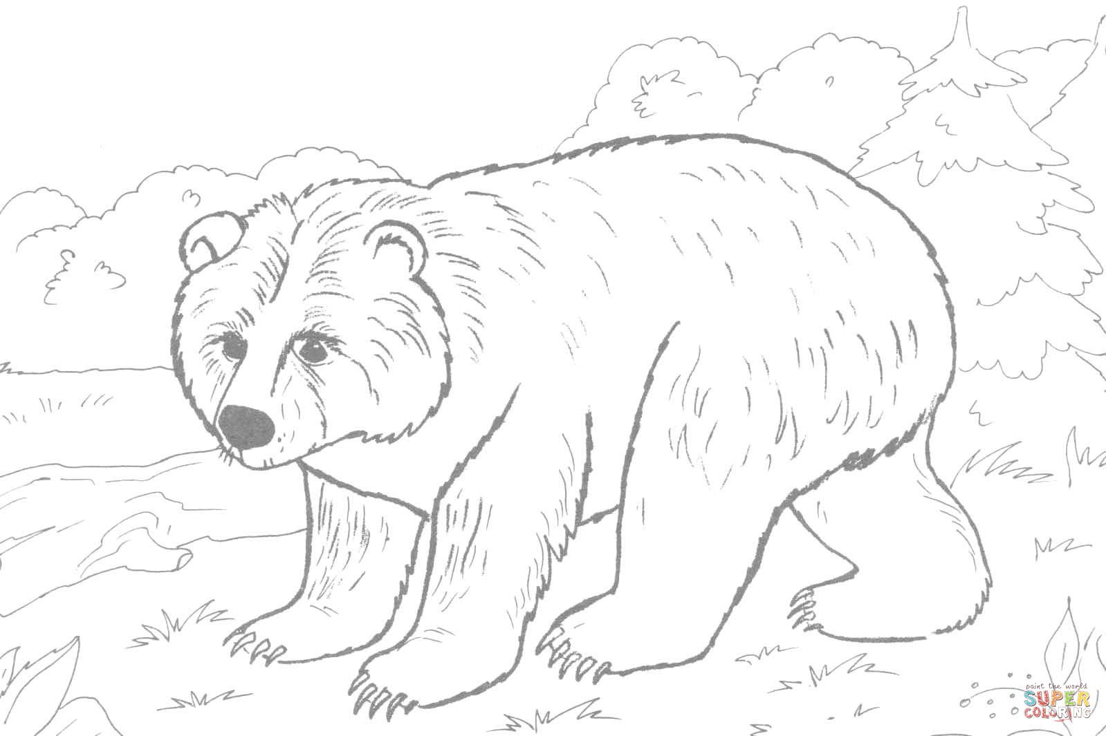 brown-bear-coloring-page.jpg (1599×1065) | bear | Pinterest | Bears