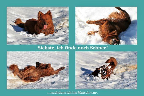 Fellpflege Harzer Fuchs Harzer Fuchs Fotos Und Tiere