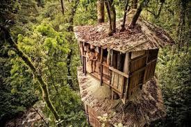Bildergebnis für case sugli alberi
