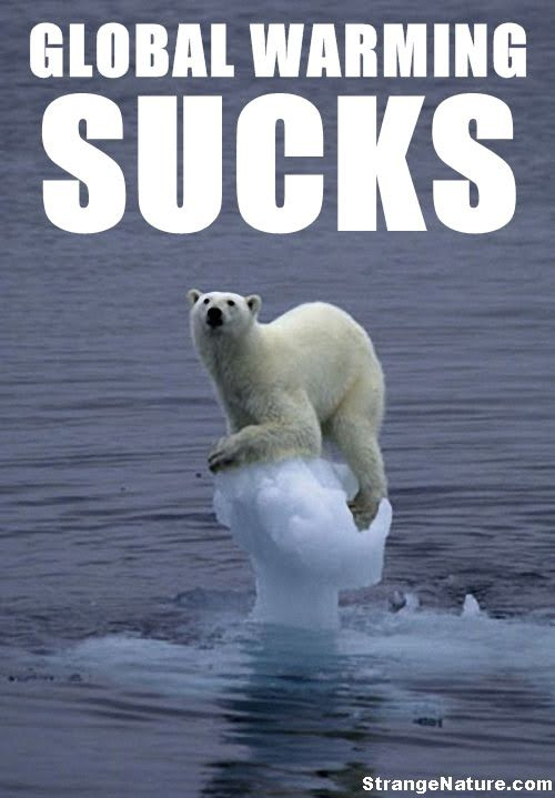Top 60 Most Funniest Animals Quotes Animals Pinterest Funny Awesome Global Warming Quotes
