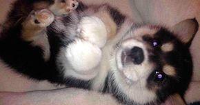 Las 18 razas de perros más raras jamás vistas en el mundo