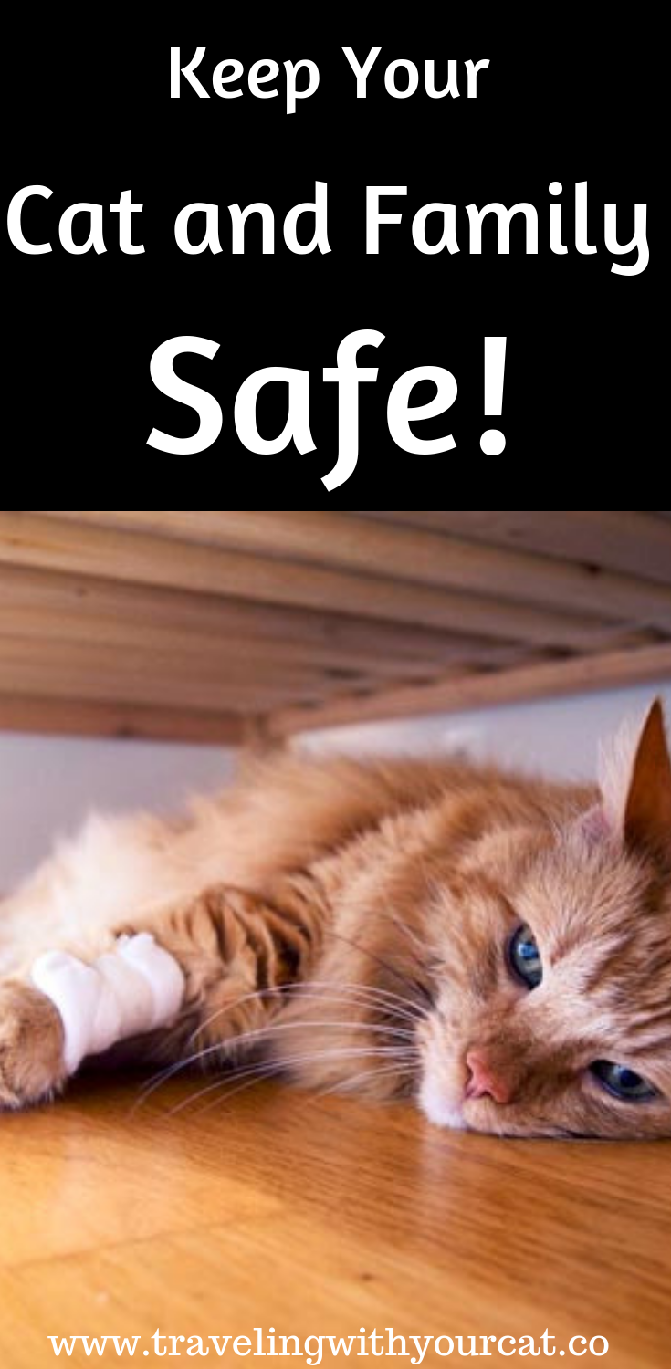 5 Best Dewormer For Cats Pro Sense Liquid Dewormer Solutions For