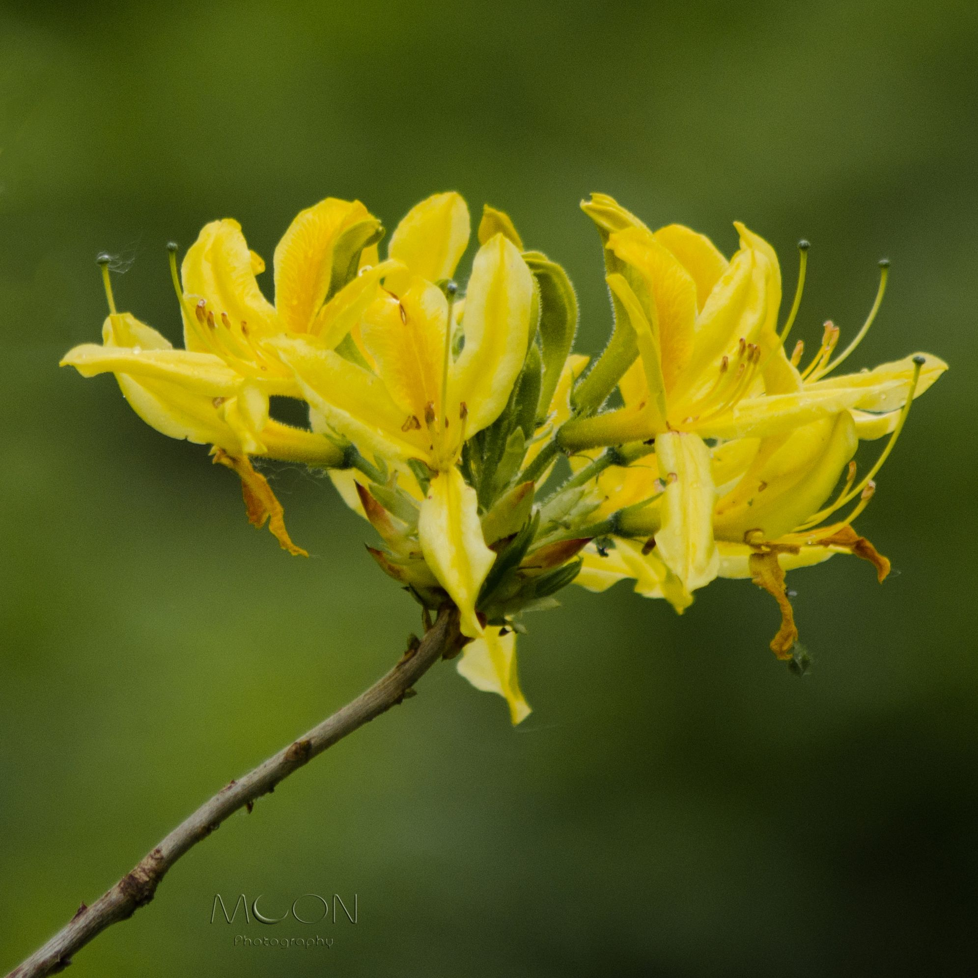 Yellow photography pinterest flowers moon photography and yellow moon photography mightylinksfo