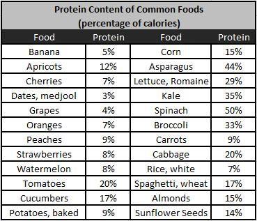 protein food chart in hindi pdf