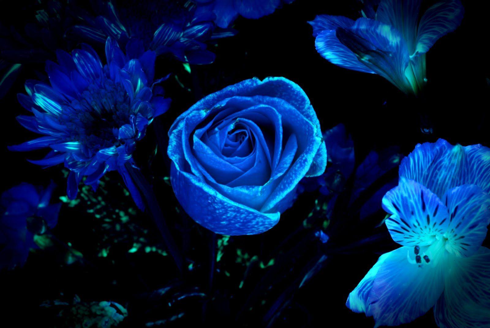Dark Flower was the pop duo of Melanie Williams and Joe