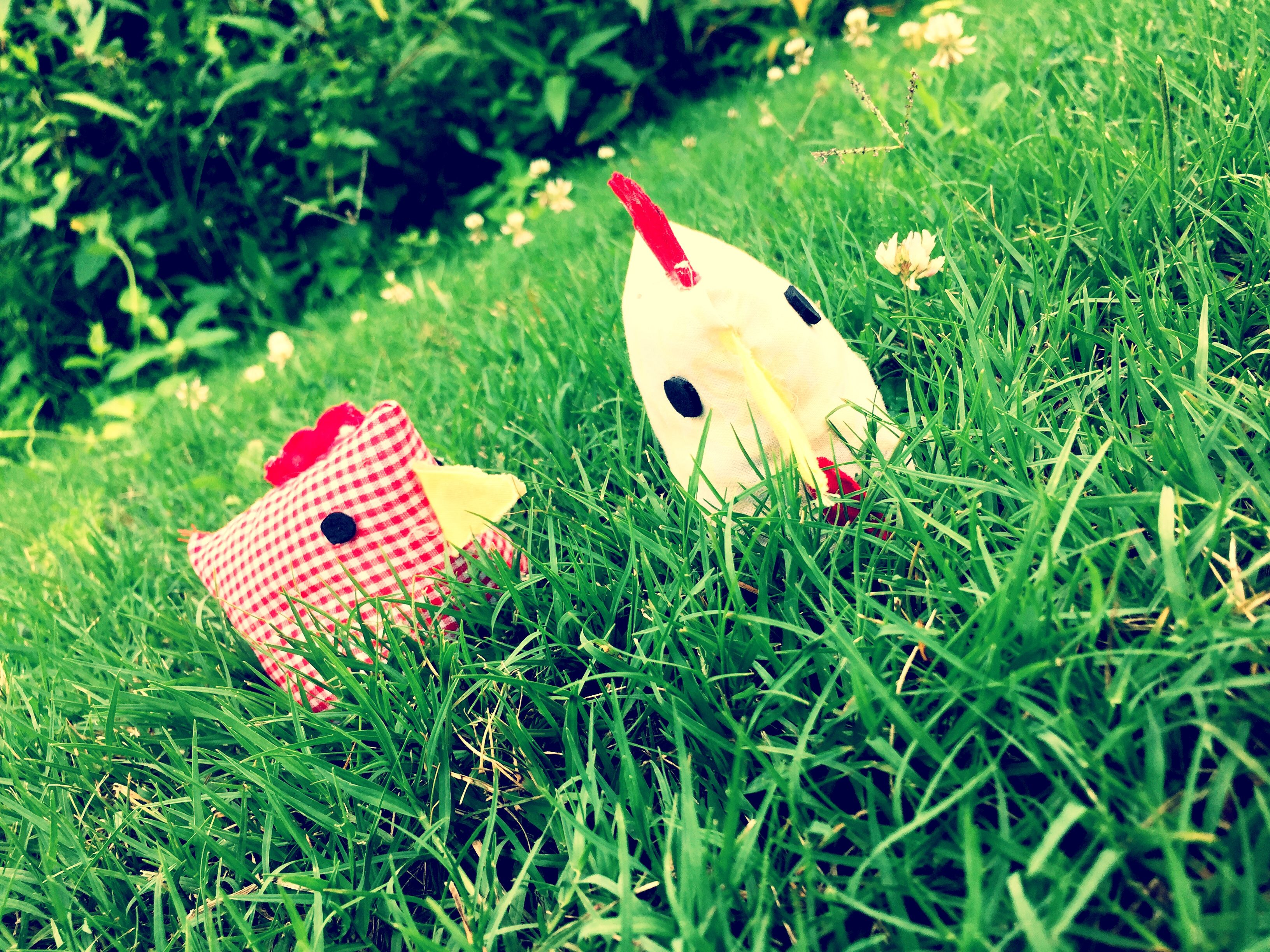 Chickens made by Kemp and Olivia (With images) Chickens