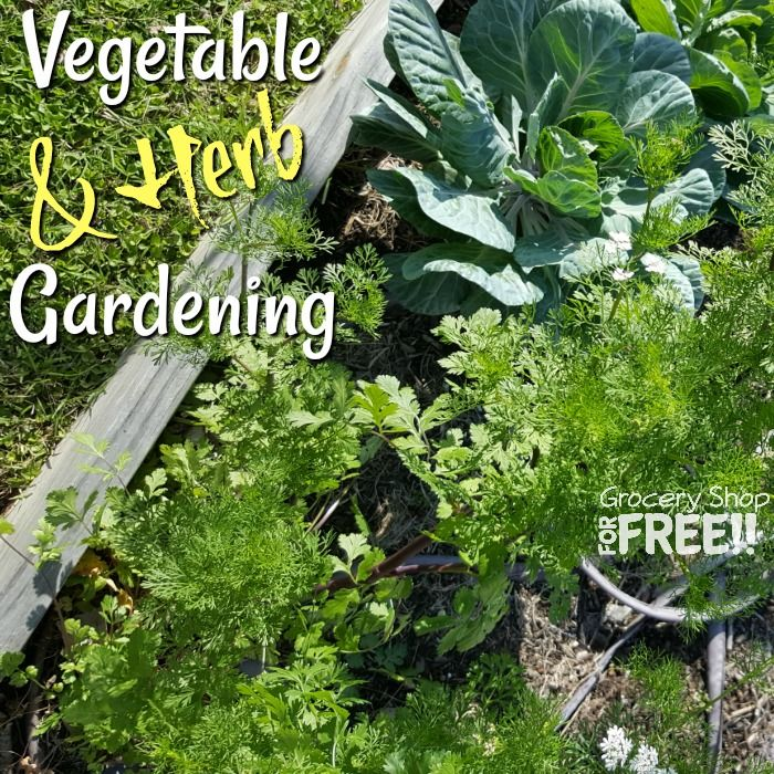 Urban Vegetable Gardening For Beginners: The Secret To A Perfect Vegetable & Herb Garden Is Easier