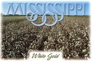 "Mississippi ""White Gold"""