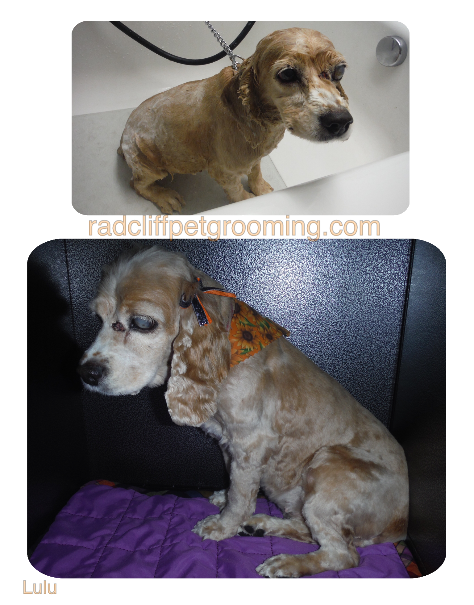 Pretty Paws llc, dog grooming, Radcliff Ky www.radcliffpetgrooming.com
