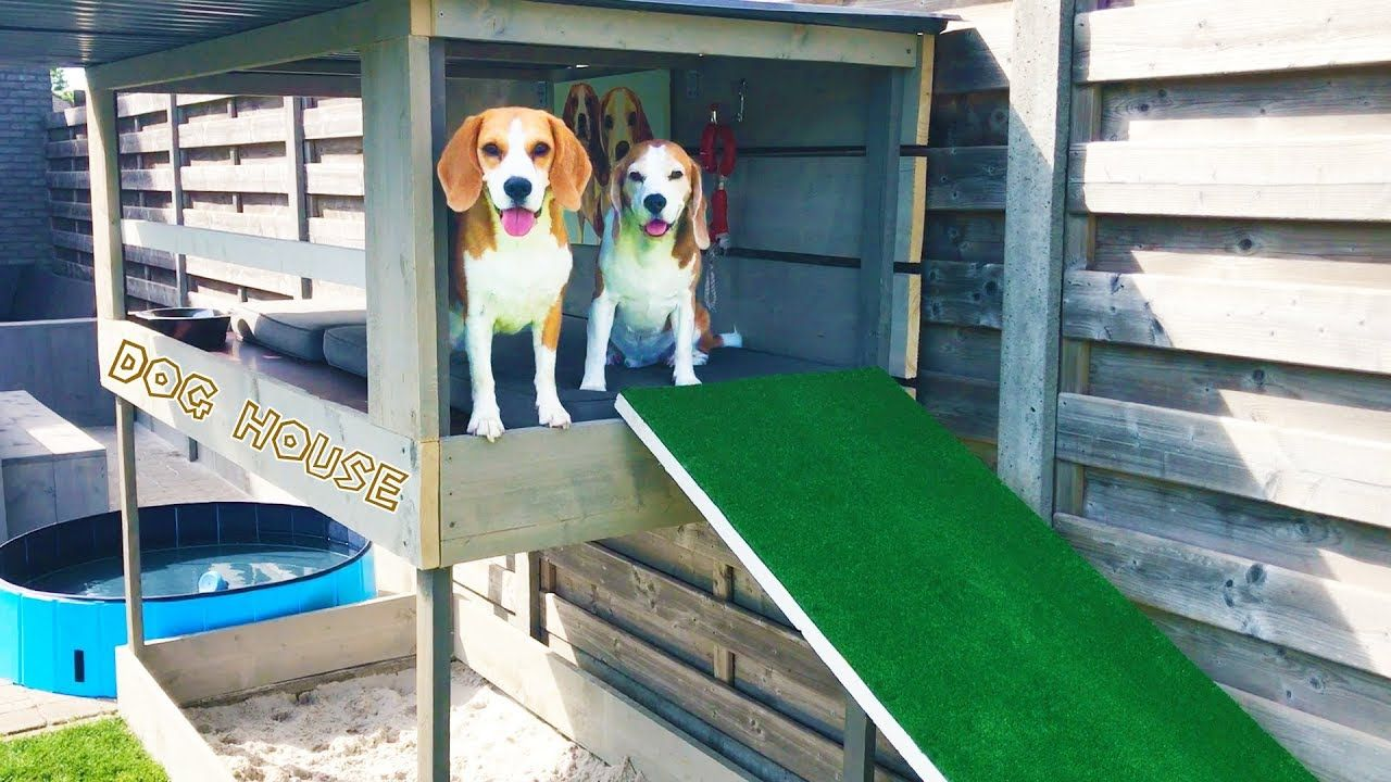 DIY Dog House with Pool , Sandbox and Dog Lounge Louie