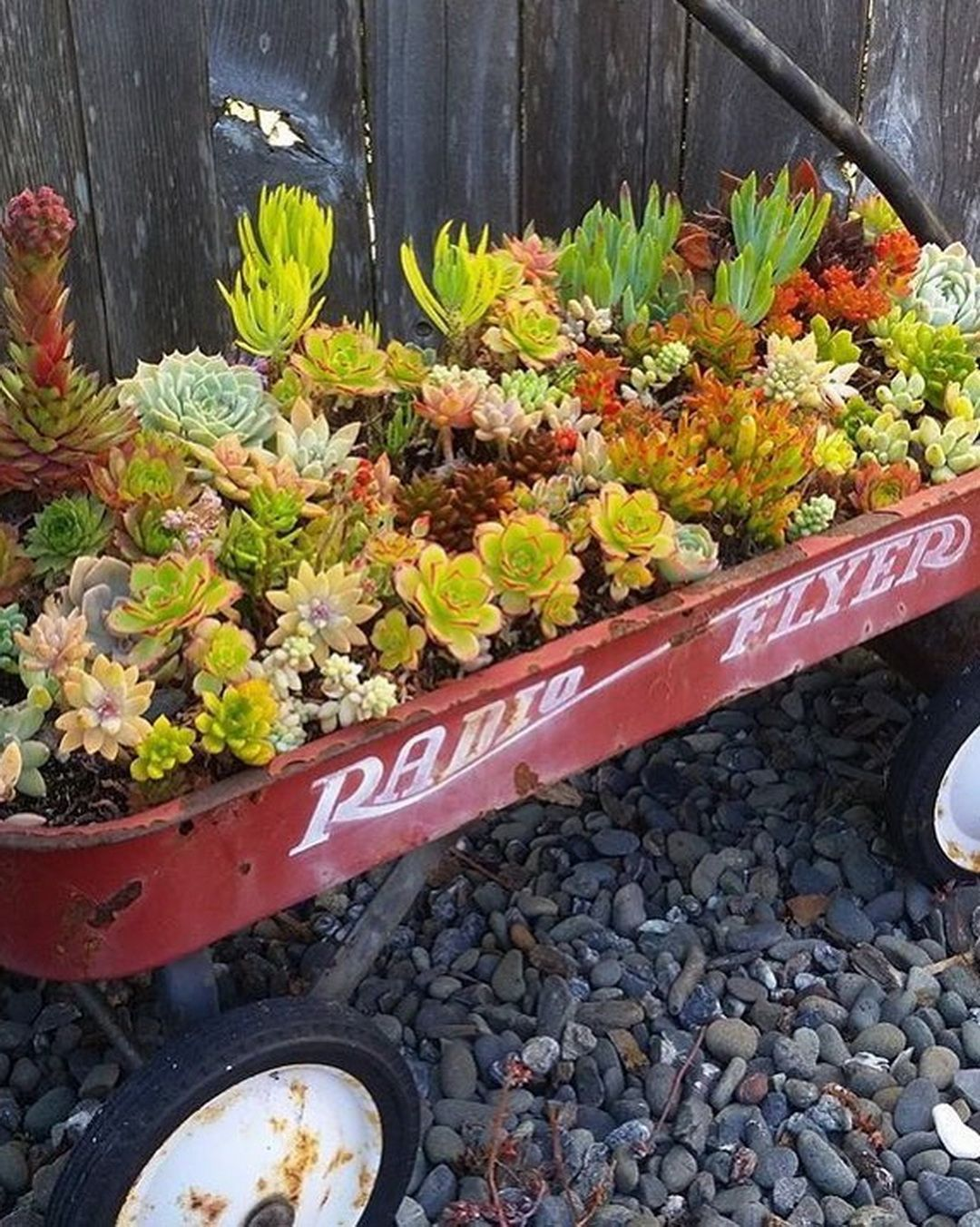 🌵 51 Jaw-Dropping Succulents @succulove | Pinterest