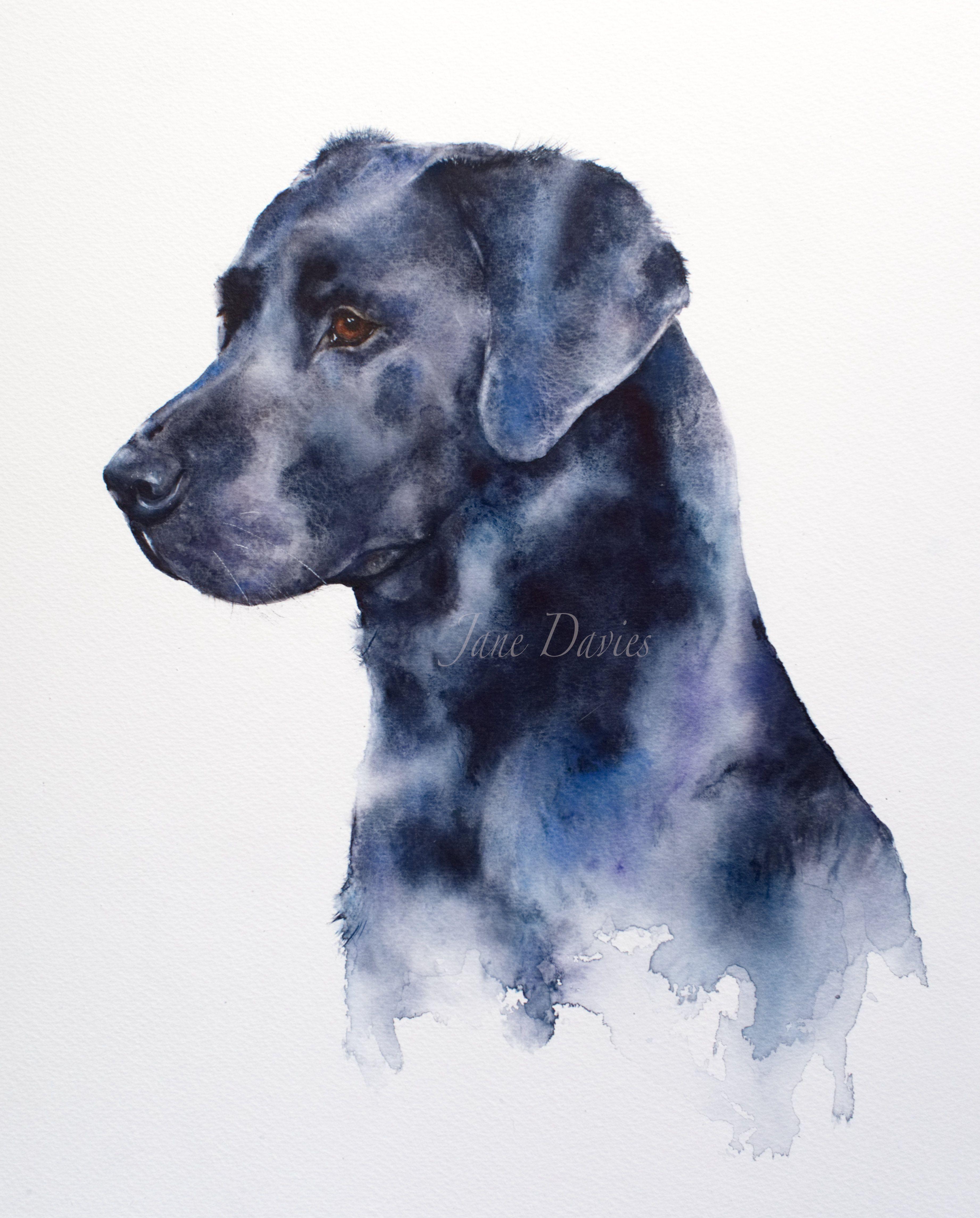 Pet portrait of a Black Labrador painted by watercolour ...
