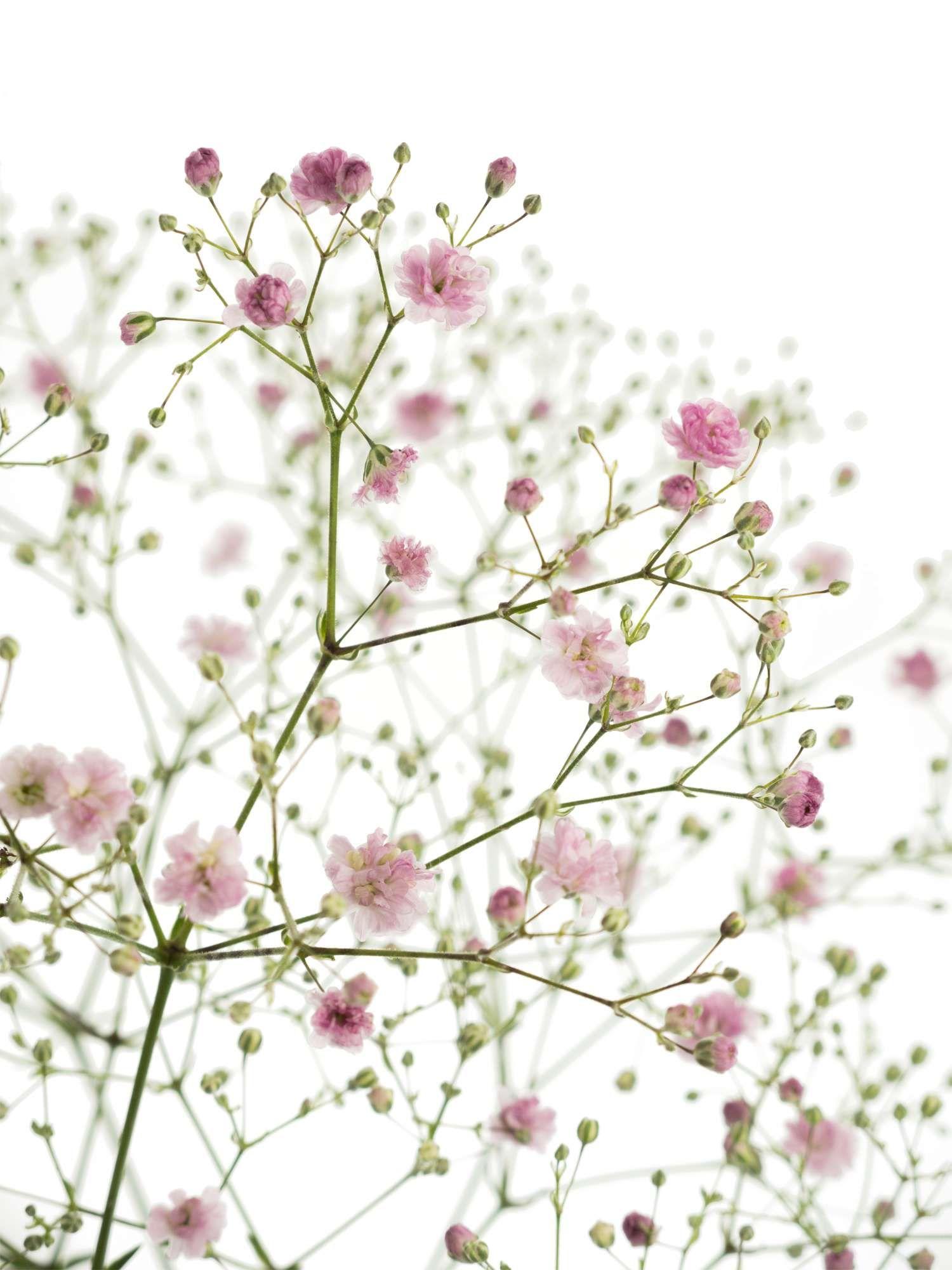 Blumen Im Mai Hochzeit Der Brautstrauss Welche Blumen Sind Beliebt