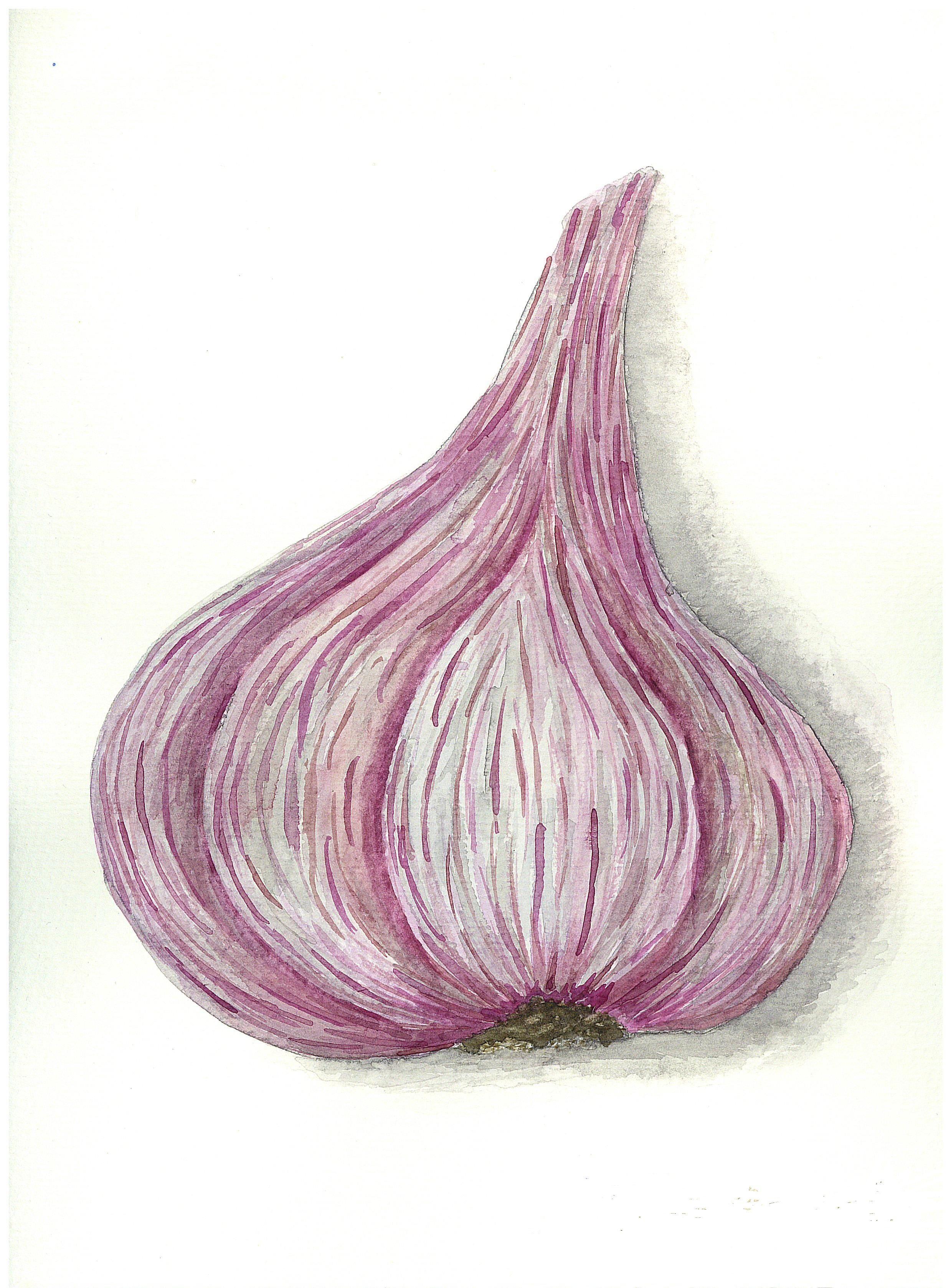 "garlic. a series of ""vegetables"". watercolor. 24х30 сm."