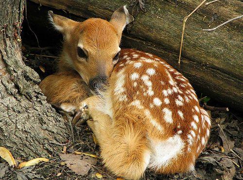 Bambiii <3