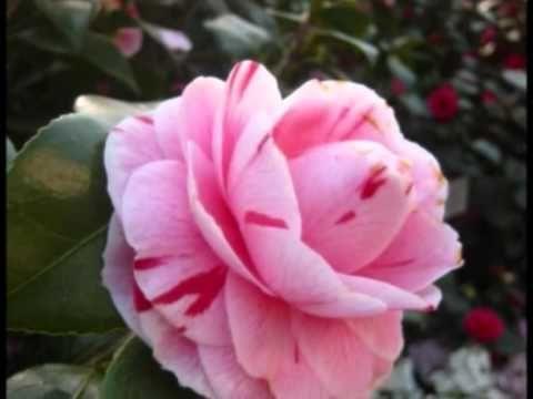 James Last La Vie en Rose