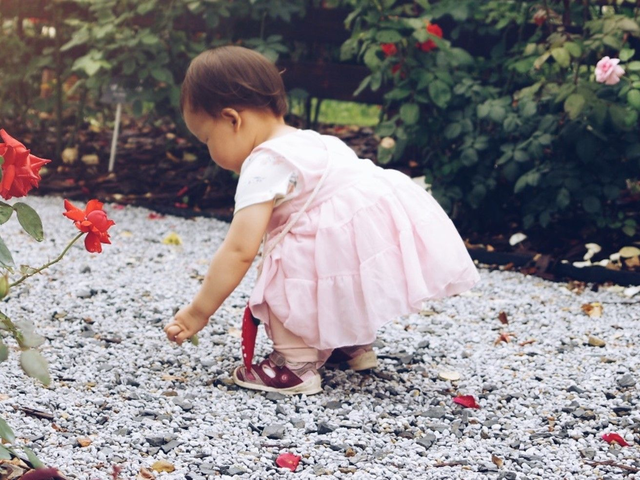 Is your little baby entering toddlerhood with the tantrums that often come with? 18 month old tantrums are common for toddlers.