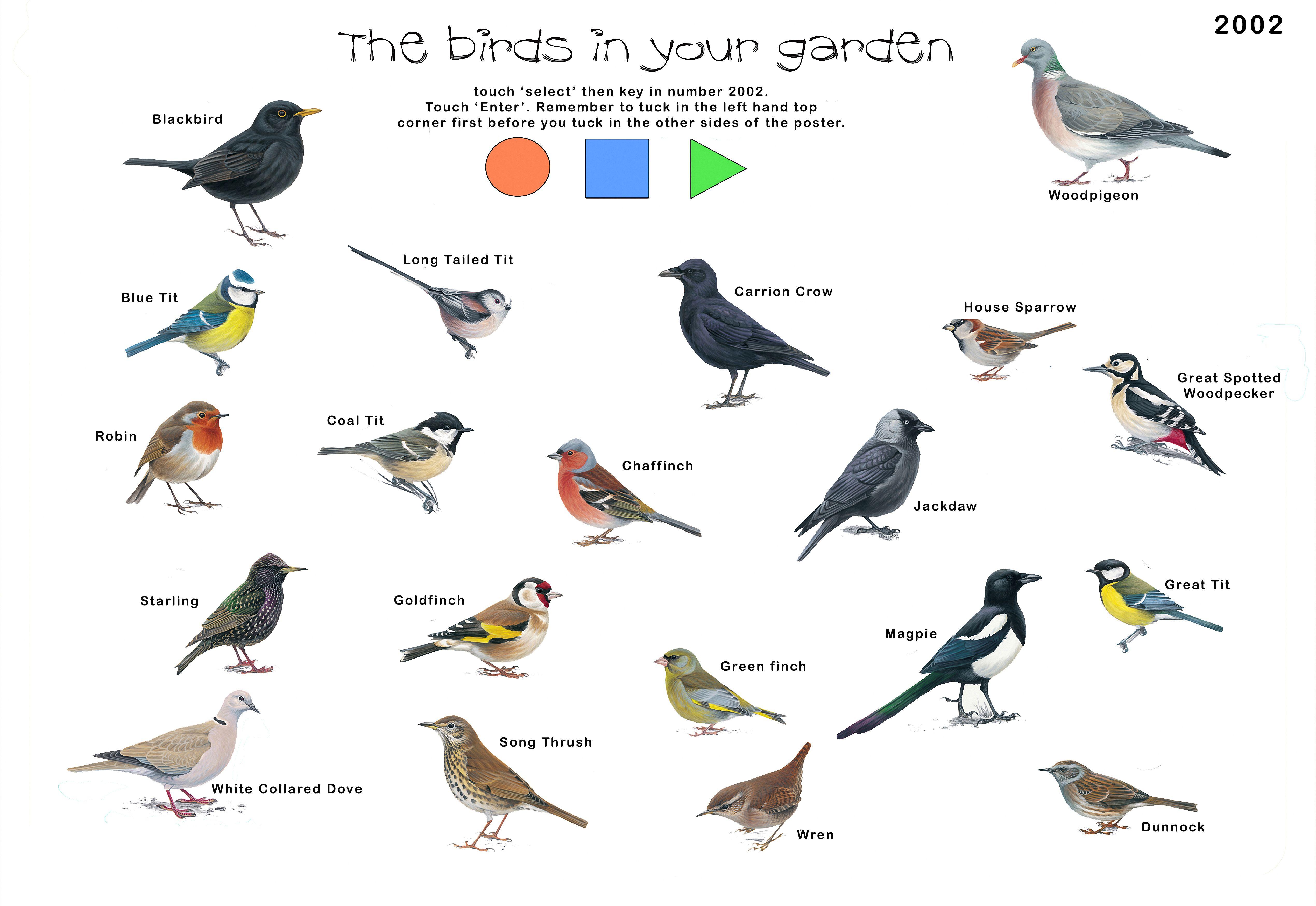 Garden Birds Copy 0 Jpg 5078 3496 British Birds Identification Bird Identification Bird