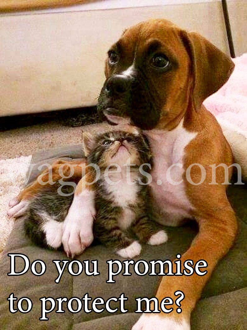 Do You Promise To Protect Me Funny Dog Memes Funny Dogs Dog Memes