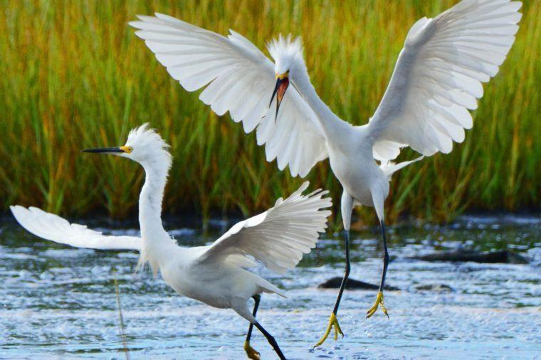 Bird Phots