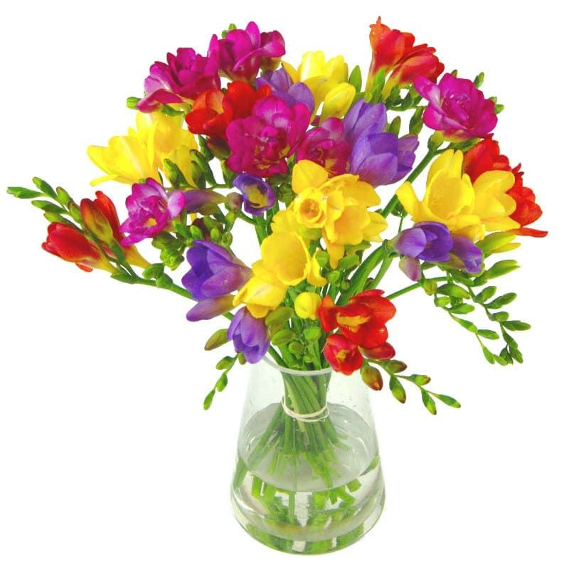 Scented Freesia Send Fresh Freesias Free Uk Delivery In 2020 Fresh Flower Bouquets Freesia Flowers Flower Delivery