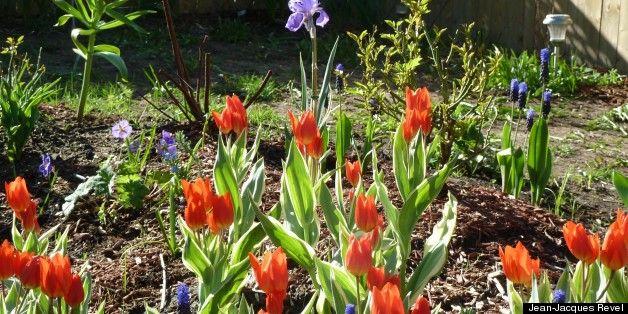 quoi faire au jardin en ce beau printemps par o commencer - Quoi Faire Au Jardin