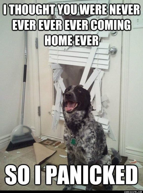 Hopefully this will not be our dog.