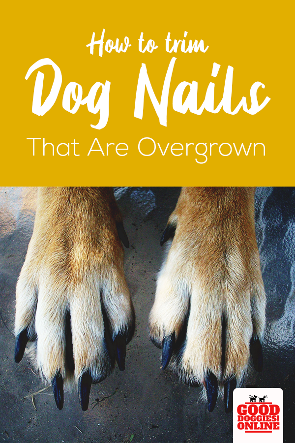 How To Trim Dog Nails That Are Overgrown Complete Guide Good Doggies Online Trimming Dog Nails Dog Nails Clipping Dog Nails