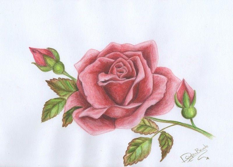 Desenho De Rosas Para Colorir 20 Imagens Para Imprimir Desenhos